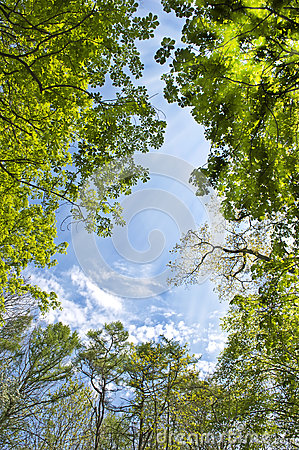 Sky in the forest