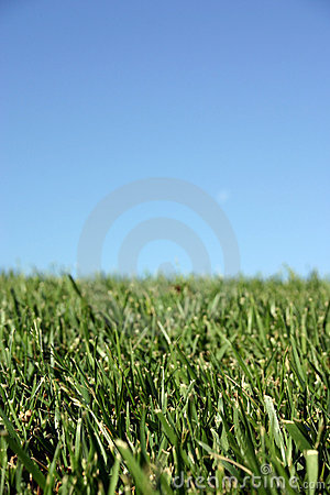 Free Sky Grass Stock Images - 6084