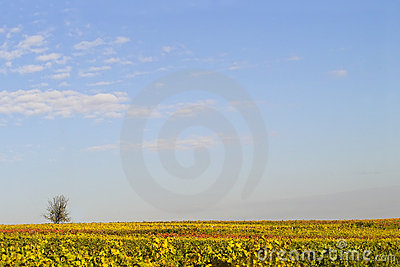 Sky Over The Wineyards Stock Photography - Image: 344542