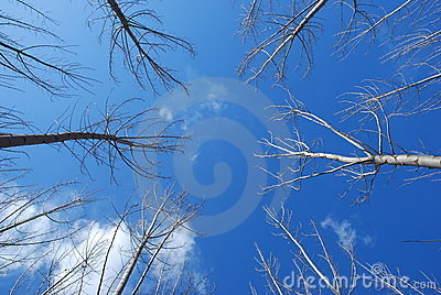 Sky And Tree Stock Images - Image: 13100074