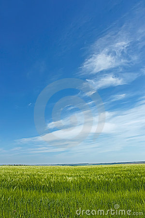 Skyscape over barley field