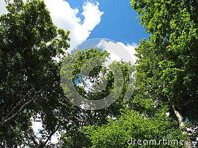 Skyward Trees