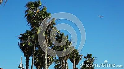 slående palmträdwind arkivfilmer