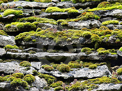 Slabs and moss