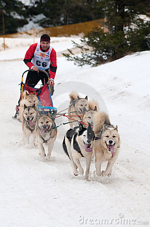 Sled Dog Racing, Donovaly, Slovakia Editorial Photo