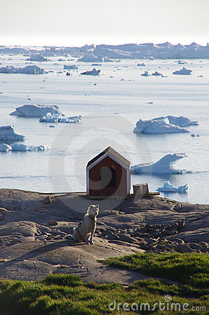 Sledge dog and kennel, Ilulissat, Greenland