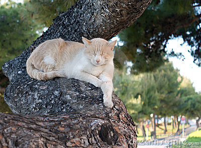 Sleeping cat on tree