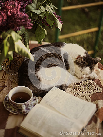 Free Sleeping Cat With Open Book Lilac In Vase And Tea Cup Royalty Free Stock Photo - 94198735