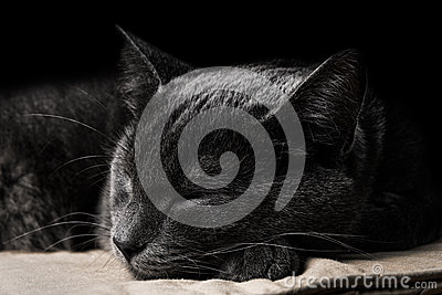 Sleeping dark gray cat