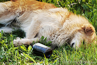 Sleeping dog with alcohol bottle