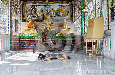 Sleeping dog at  Buddhist Temple, Thailand Editorial Photography