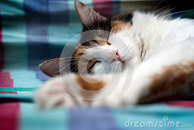 Sleeping furry cat