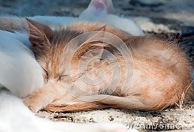 Ginger kitten sleeping on mother-cat