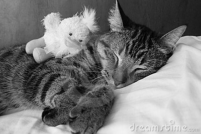 Sleeping kitten in black and white