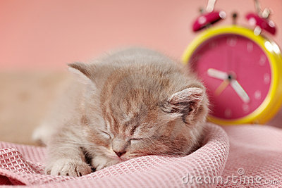 Sleeping kitten and clock