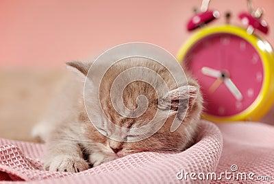 Sleeping kitten and clock