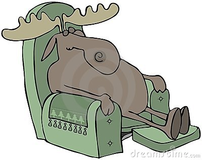 Sleeping Moose In A Chair