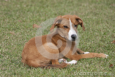 Sleeping pup laying in green grass. Stock Photo