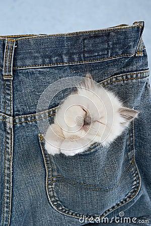 proxy - Pocket kitties - Photos Unlimited