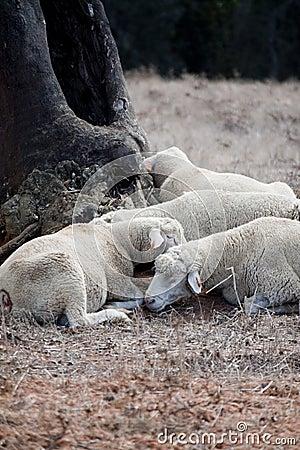Free Sleeping Under A Tree Royalty Free Stock Image - 14265756