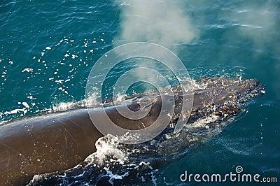 Sleeping whale