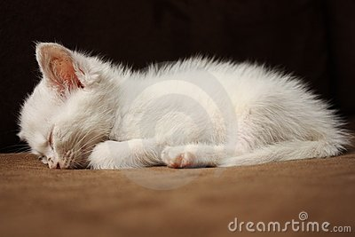[Image: sleeping-white-kitten-17915180.jpg]