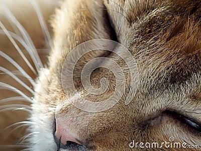 A sleepy cat sleeping Stock Photo