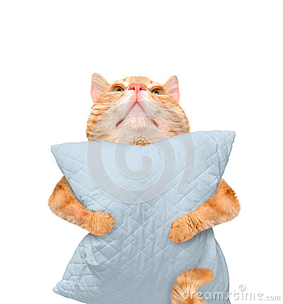 Free Sleepy Cat With A Pillow. Stock Photo - 72566580