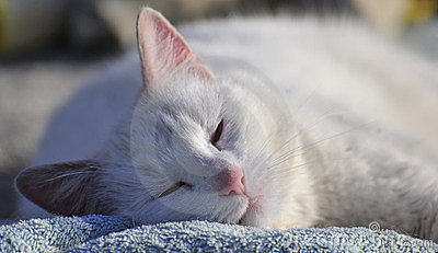 Sleeping contented cat (Felis catus)