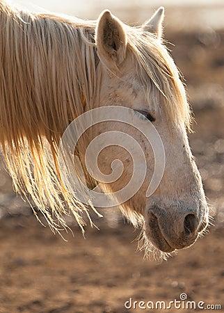 A sleepy horse