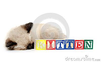 Sleepy kitten and blocks