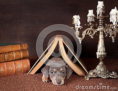 Sleepy under a book