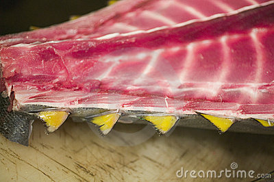Slice of fresh fish