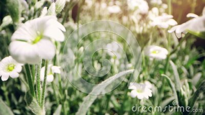 Sliding through the flower meadow on sunny summer day stock footage