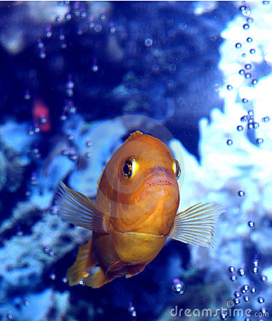 Slight Resemblance To Nemo???
