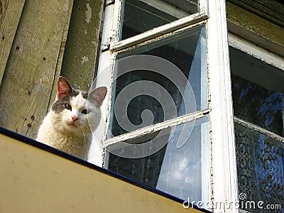 Slimme kat