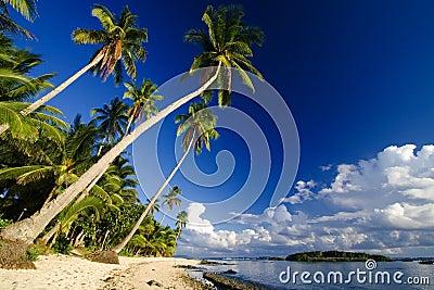 Slingerend palmparadijs