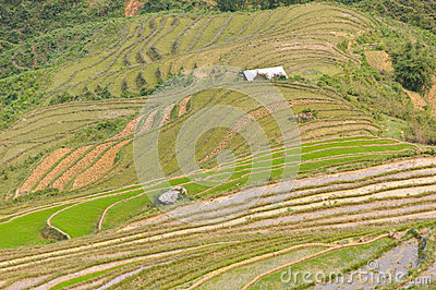 Sloping paddy fields