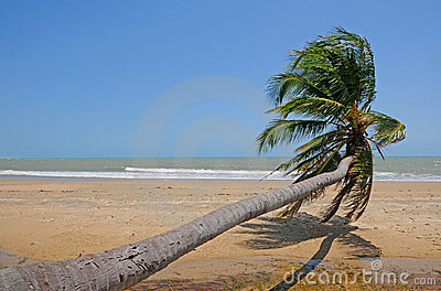 Sloping palm at beach