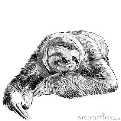 Free Sloth Sketch Stock Image - 90617671