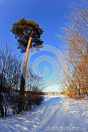 Slottväg som är snöig till