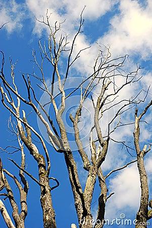 The Slovak Republic 2008 - Tree and blue sky