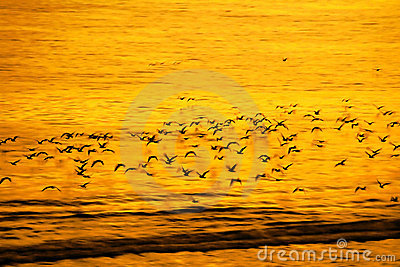 Slow flight of birds and panning in motion blur natural backgrou