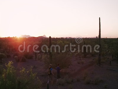 Slow Motion Shot of Desert Hikers at Sunset with Lens Flares. Slow Motion Shot of Desert Hikers Surrounded by Saguaros at Sunset with Lens Flares stock video footage