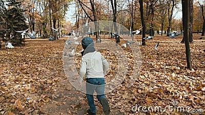 Slowmotion Parque de Automn corridas de uma criança no rebanho dos pombos Voam afastado video estoque