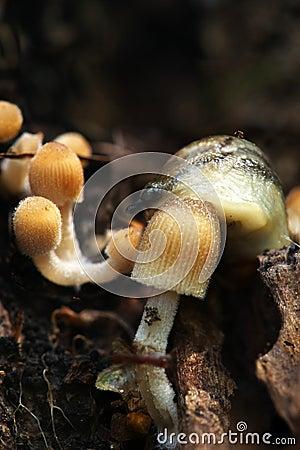 Slug and mushroom