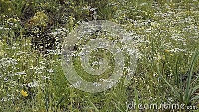 Sluiting van bloesem met wilde bloemen, ontspanning van de natuur stock video