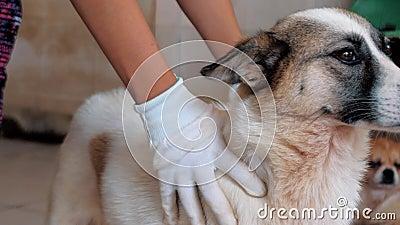 Sluiting van de vrouwelijke handen tegen de caged stray dog in het huishouden van huisdieren Mensen, dieren, vrijwilligers en hul stock footage