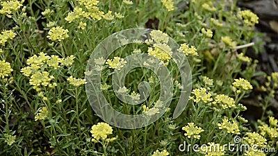 Sluiting van de weide met wilde bloemen, ontspanning van de natuur stock footage