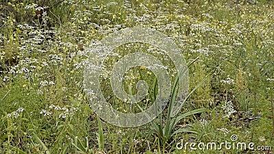 Sluiting van de weide met wilde bloemen, ontspanning van de natuur stock videobeelden